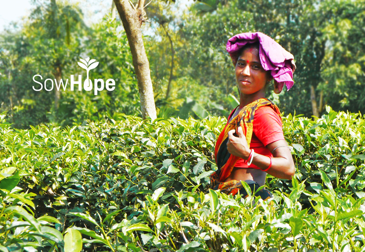 Bangladesh tea gardens woman.
